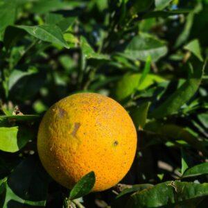 cassa arance
