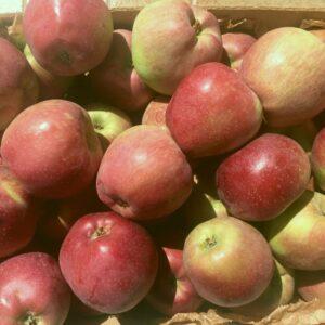 cassa di mele dell'etna