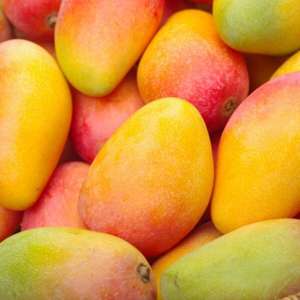 Mango Siciliano